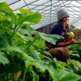 Piedmont Farm Tour