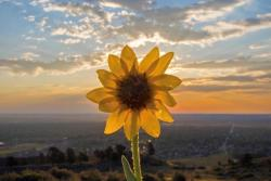 flower eclipse itsbentumnus