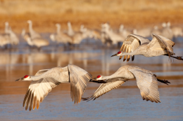 Bosque del Apache National Wildlife Refuge