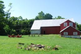 Dickinson Farm-220