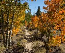 Hilton Creek Trail September 2016