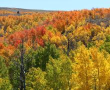 Lobdell Lake Fall Colors