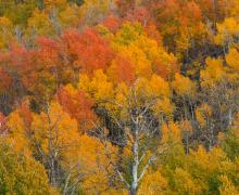 Zoomed in fall colors at lobdell lake road