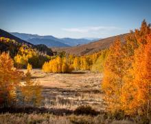 Lobdell lake road fall