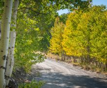 Lobdell Lake green fall colors