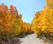 Sage Hen Meadows Road Fall Colors