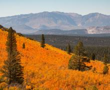 Sagehen Summit vista fall colors