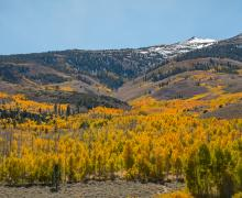 summers meadow fall color view