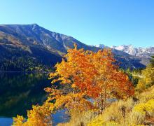 Twin Lakes Bridgeport 10/9/16 Fall Colors