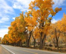 US 395 in topaz fall colors