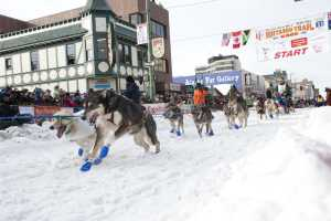 Iditarod sled dog race start in Anchorage