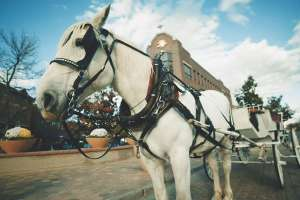 Horse-Carriage-Tour