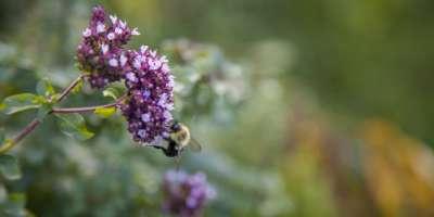Bee in Fairview