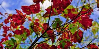Photo of the Day: First Signs of Fall