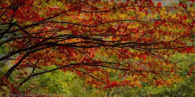 Photo of the Day: Fall Colors at Graveyard Fields