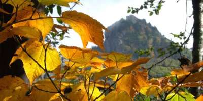 Fall Color Report for October 7