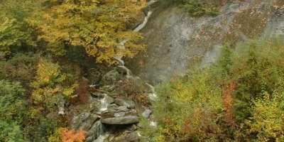 Fall Color Prediction for Asheville