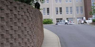 Bear Sighting in Downtown Asheville Today