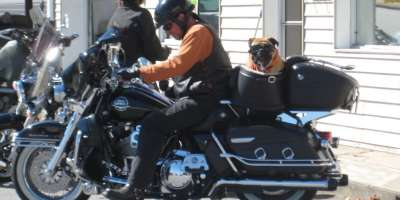 Photo of the Day: Dog on a Hog