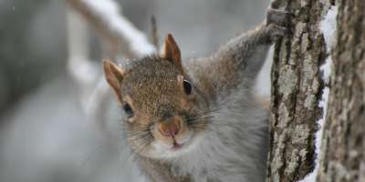 Finding Winter Wildlife