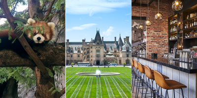 What's New in Asheville 2019