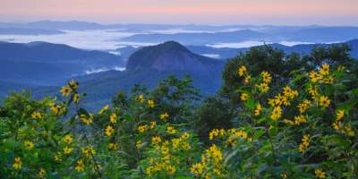Looking Glass Rock with wildflowers