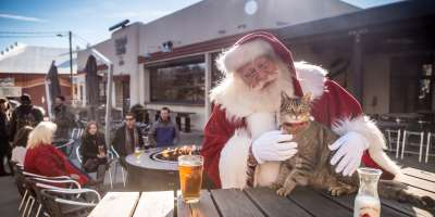 Christmas Cat at Wicked Weed