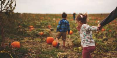 U-pick pumpkin field in SoIN