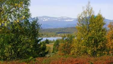 Torpoåsen, Ål i Hallingdal
