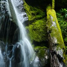 Upper Trestle Creek Falls, Cottage Grove by Eugene, Cascades & Coast