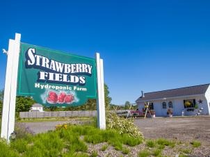 Strawberry Fields farm