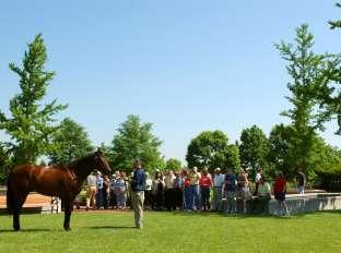 Stallion at Ashford Stud