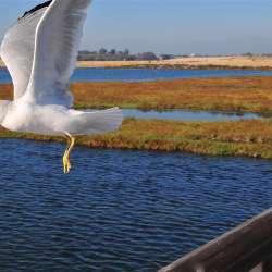 Wetlands & Eco Areas