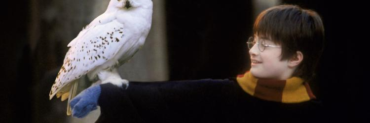 Harry Potter comes to Grand Rapids with the GR Symphony