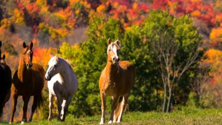 Horses running through Rosemary Sanctuary