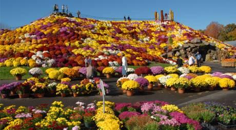 GARDENS - OTT'S EXOTIC PLANTS