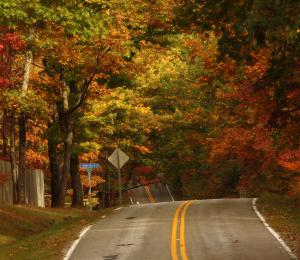 This is a picture of a road and fall trees.