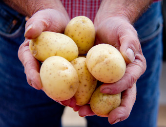 Two hands holding potatoes at the Downtown Market in Grand Rapids