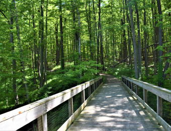 Trail through  Fallasburg Park and Lepard Nature Preserve.