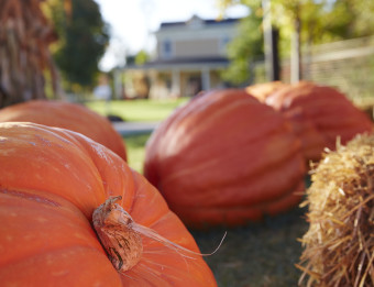 Pumpkins at the Meijer Gardens