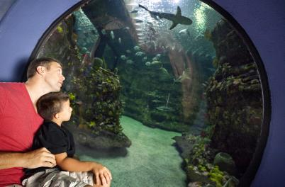 NC Aquarium at Fort Fisher: Father and Son