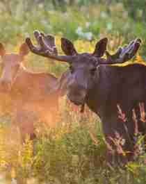 To elger ute i norsk natur om sommeren