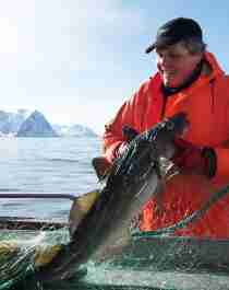 A man getting a large fish out of a fishing net on a boat outside of Senja, Northern Norway