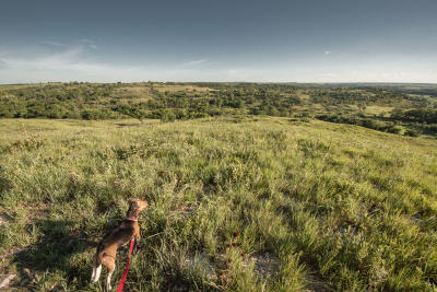 A beagle on a prairie hike