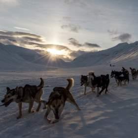 Dog sledding, Longyearbyen, Svalbard