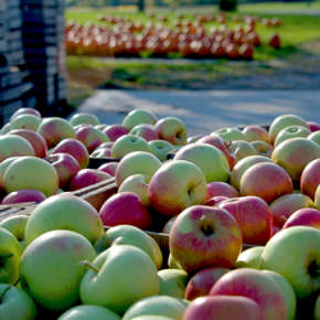 Fall Fun - Orchard