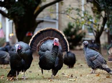 Where to Gobble Up Thanksgiving Dinner 2018