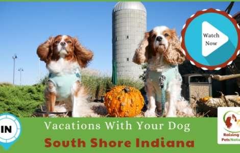 South Shore Along Lake Michigan: a Dog-Friendly Destination