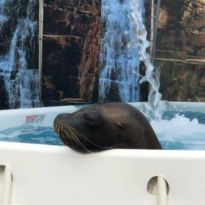 Sea Lions Make Splash at Topeka Zoo