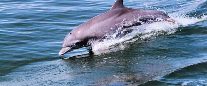 4 Ways To See Dolphins In Virginia Beach